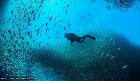 菲律宾描东岸(Batangas)潜水胜地正式对游客开放